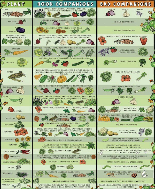188 best Garden Charts & Printables images on Pinterest