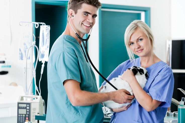 http://www.vettechu.com/vet-tech-schools-in-pittsburgh-pa/  Vet Tech Institute in Pittsburgh provides courses, training and programs aimed to offer extensive expertise in the field, as skills and knowledge are essential to advance in this in-demand career.