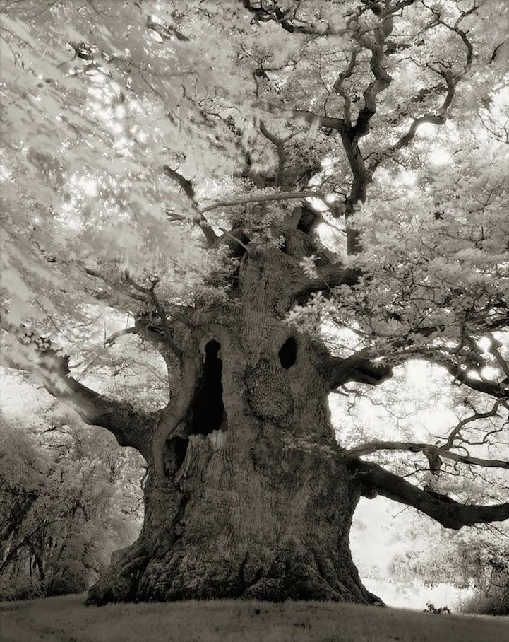 For the past 14 years, San Francisco-based photographer Beth Moon has journeyed around the world in a quest to document some of the world's biggest, oldest, and rarest trees. In her beautiful new book titled Ancient Trees: Portraits of Time, the photographer reveals the staggering beauty of baobabs, sequoias, yews, and other ancient trees that have stood the test of time.
