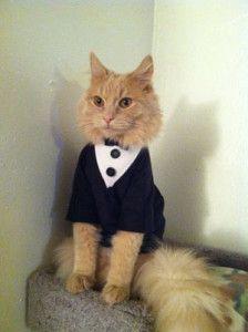 traje elegante gato