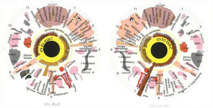 symbolique iridologie
