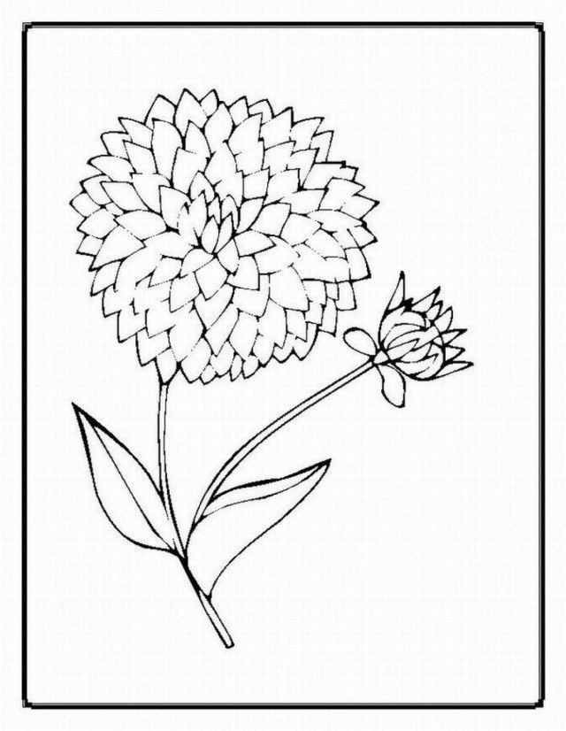 Be Flower Coloring Pages Realistic Fans Share Images
