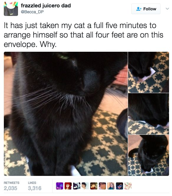 This cat who knows exactly what she wants: – katzen