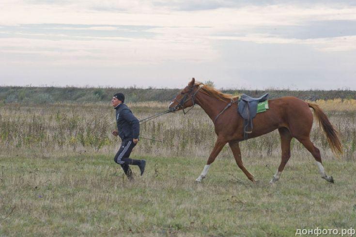наездник разогревает лошадь.