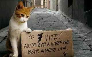 """Nel nostro Paese avvelenati 70mila gatti ogni anno: ecco le regioni più spietate coi felini Nel 1990 si è istituita anche in Italia la """"festa del gatto"""", che ricade il 17 febbraio. Una celebrazione che forse ancora in pochi conoscevano – fanatici dei felini a parte – e resa famosa soprattut #gatti #animali"""