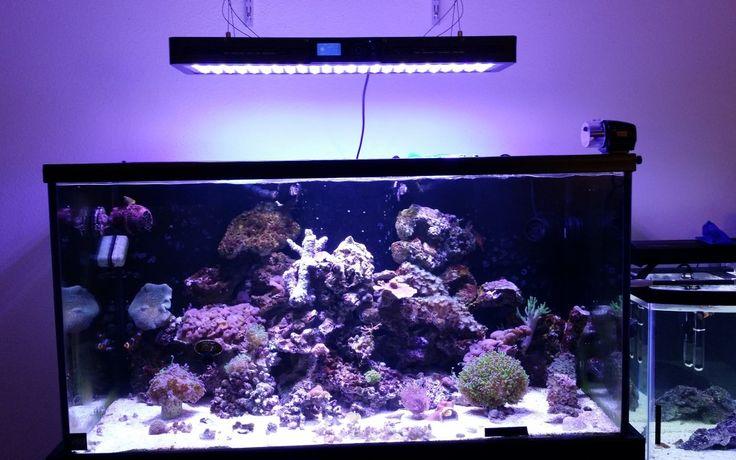 Marine light for reef tank