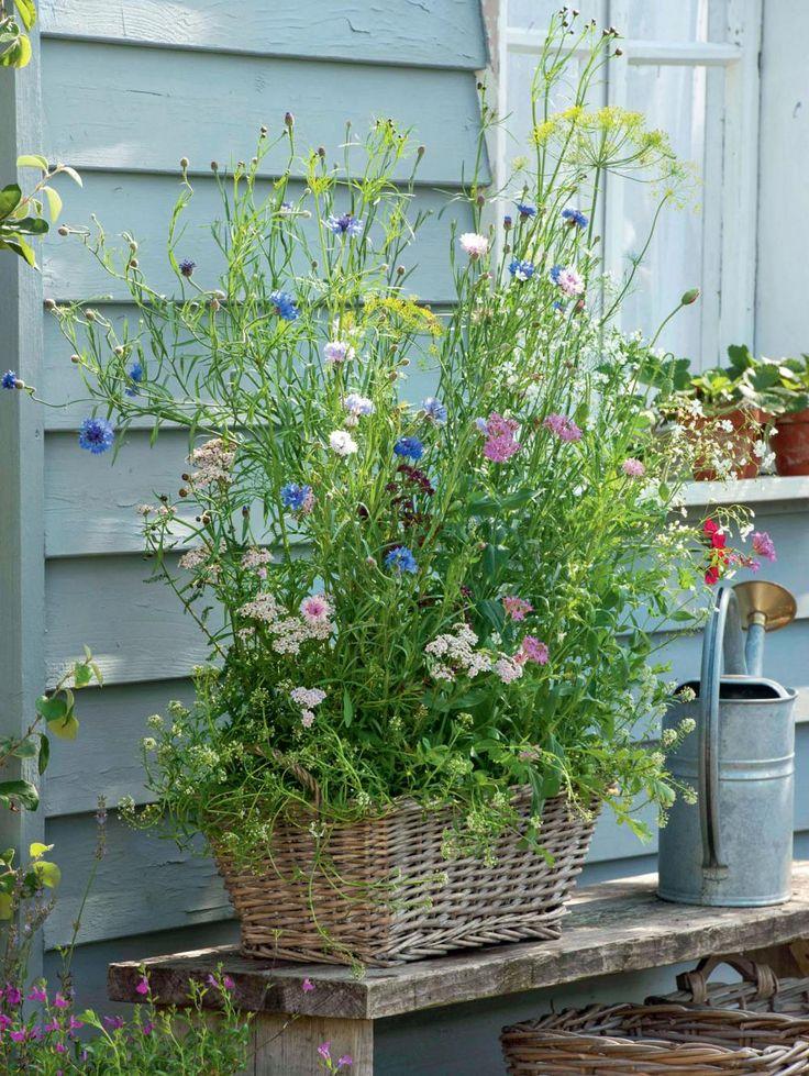 Bauerngartenblumen und Kräuter bezaubern mit üppiger Blütenpracht. Damit nicht genug: Sie locken Insekten als Bestäuber in den Garten, schützen Obst und Gemüse vor Schädlingsbefall und sichern so Ernte – sie sind also ein blühender Pflanzenschutz.