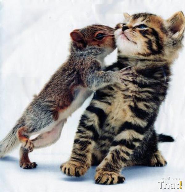 Zwierzęca miłość nie zna granic That.pl -Rozrywka, śmieszne, zabawne zdjęcia