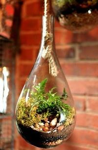 es muy fácil reutilizar las botellas y qué mejor que hacer un terrario