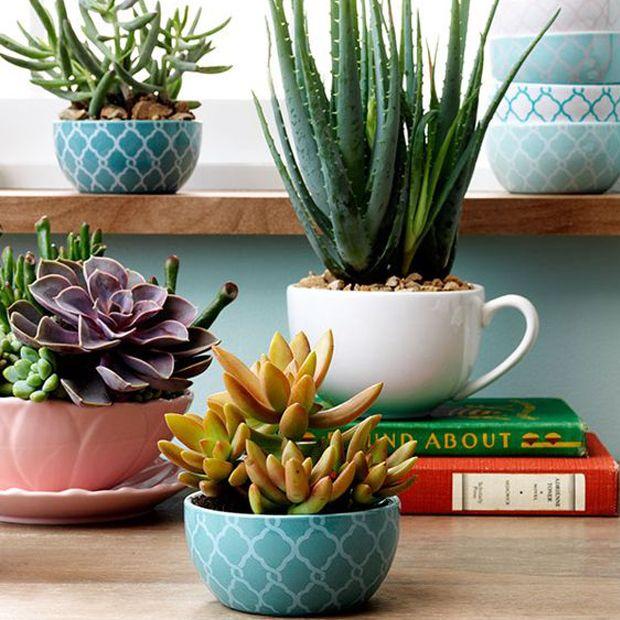 Plantar suculentas e cactos em xícaras. Aprenda passo a passo!