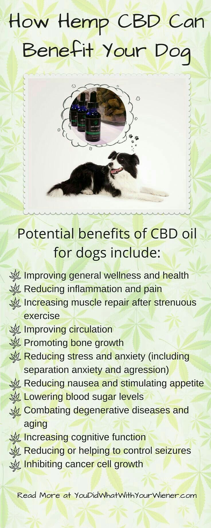 Hemp CBD oil benefits for dogs and other pets