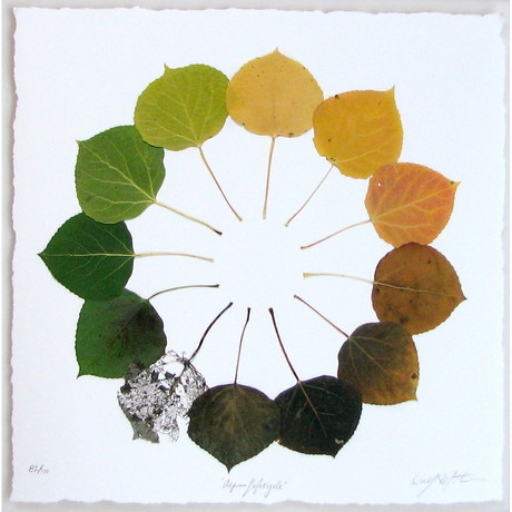 very cool: Tattoo Ideas, Fall Leaves, Aspen Leaf, Lifecycl Prints, Life Cycling, Owens Mortensen, Colors Wheels, Leaf Art, Aspen Lifecycl