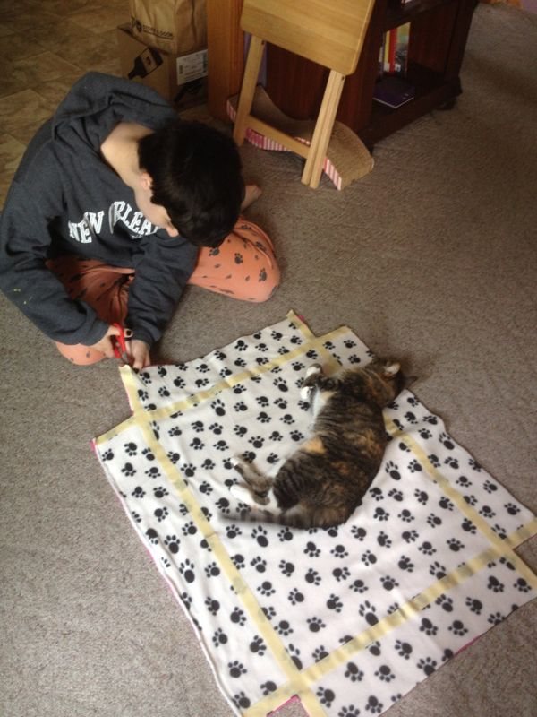 5 DIY Projects You and Your Kids Can Make for Your Cats | Catster
