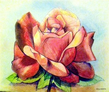 Rose - Rózsa Colored pencils - ink pen - 21 x 30 cm - by Márta Bolla - Hungary