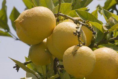 Lemon Oil Vs. Lemongrass Oil