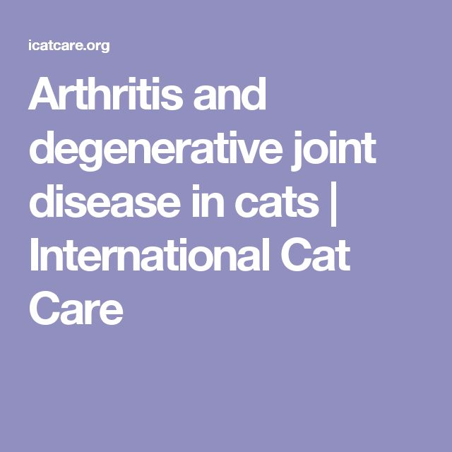 Arthritis and degenerative joint disease in cats | International Cat Care