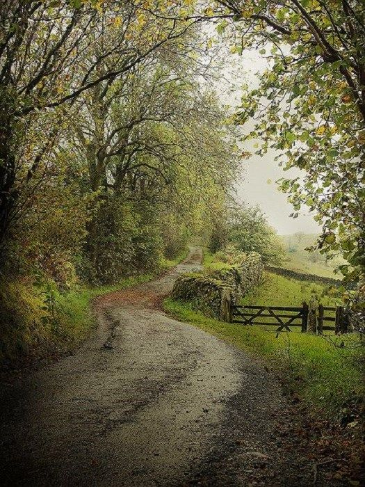 Country Lane, Cumbria, England