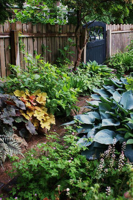 Heuchera, blue hosta, garden gate
