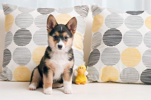 Puppy Love:  Addie