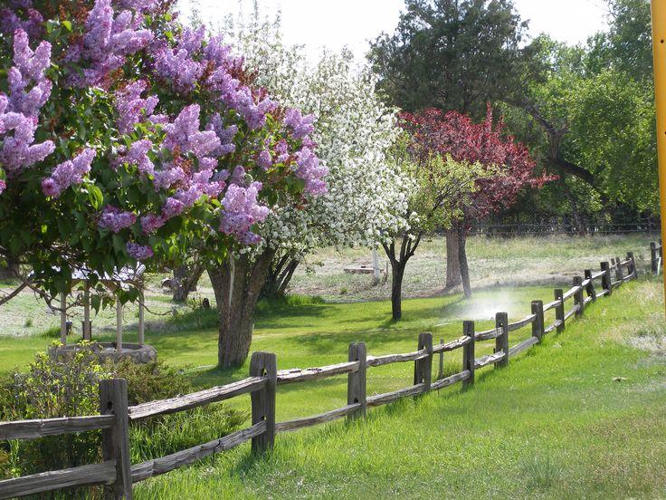Flowering Tree Identification | flowering-trees - Crestone Eagle | Crestone Eagle