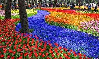 HITACHI SEASIDE PARK, AN ENDLESS FLOWER PARADISE