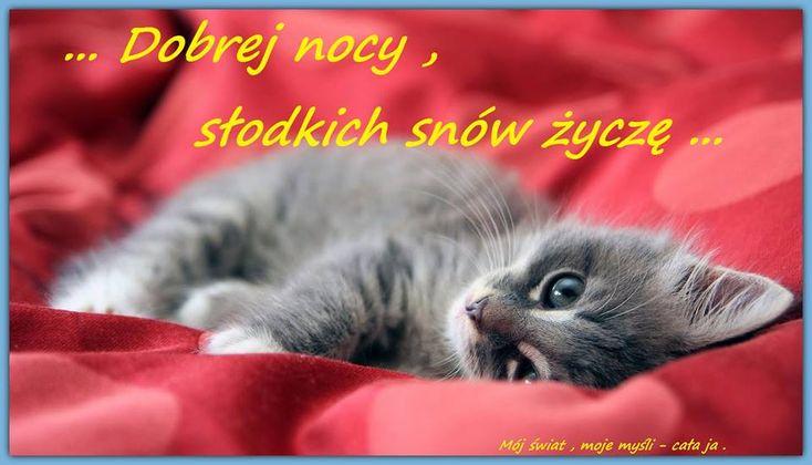 Dobrej nocy, słodkich snów życzę #dobranoc slodkich snow