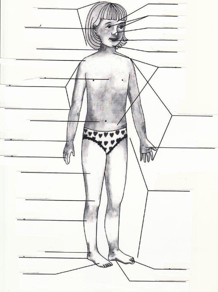 lidské tělo - popis