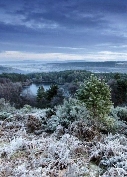 Scottish Highlands (Winterwatch - BBC) from the delightful gif files of  HeadLikeAnOrange.tumblr