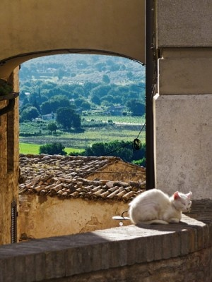 Spello, Italy-- Which view is best, the countryside or me?  Easy answer.