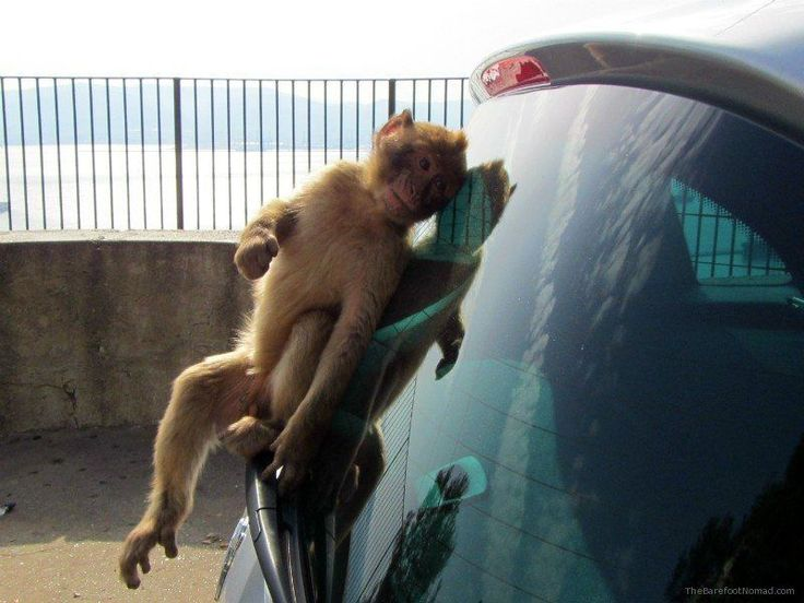 The Angkor Wat Monkeys are Jerks! & Other Naughty Monkey Tales - History Fangirl