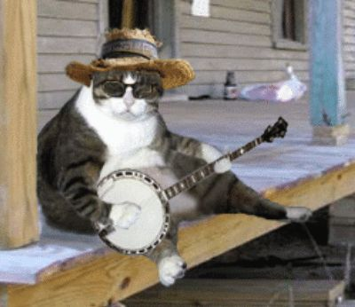 mixing bluegrass - banjo cat approves | Mixing and ...