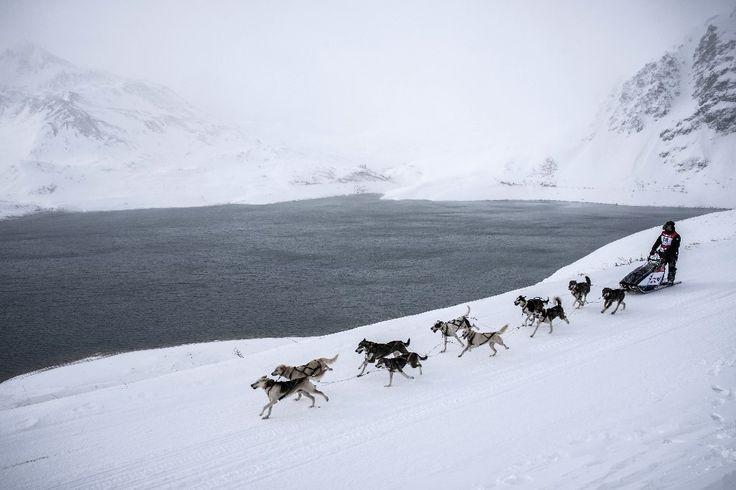 """Un musher et ses chiens de traîneau lors d'une épreuve à Val-Cenis lors de la 12e édition de """"La Grande Odyssée"""", dans les Alpes"""