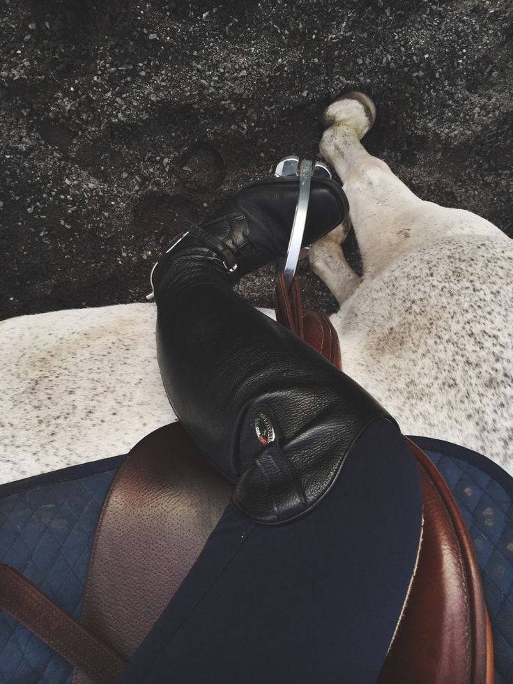 Navy blue is a popular color to wear with a grey horse.