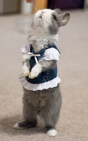 I don't approve of dressing animals in clothes. So uncomfortable! But oh my, this bunny is addorable