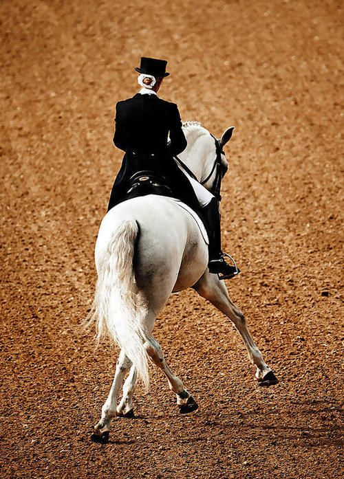 35 Best Images About Dressage Half Pass On Pinterest