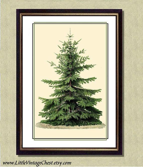 FIR TREE   Christmas Art Print   Poster Art by littlevintagechest, $7.00
