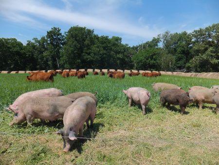 AMAZING farm blog: Curios Farmer.  So much good info especially on Pigs.