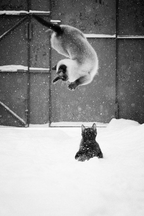 I got you!! ≧^◡^≦ ☚ | animals | Pinterest | Cats, Kittens and Animals