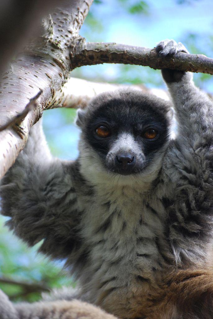 Zubumafu Animais Da Natureza Pinterest Animal