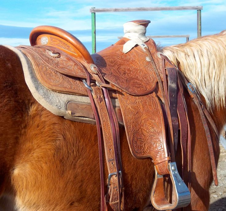 Old Time Western Saddles – Daily Motivational Quotes