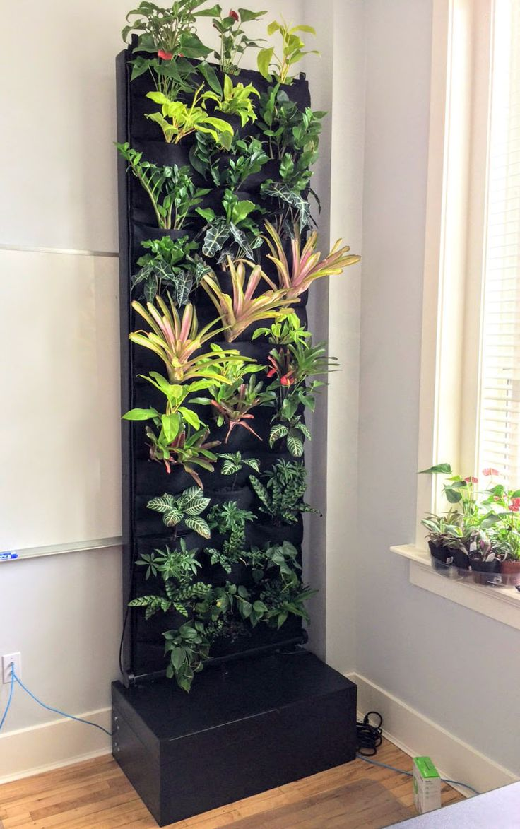 Jared's Office Living Wall is a Huge Hit