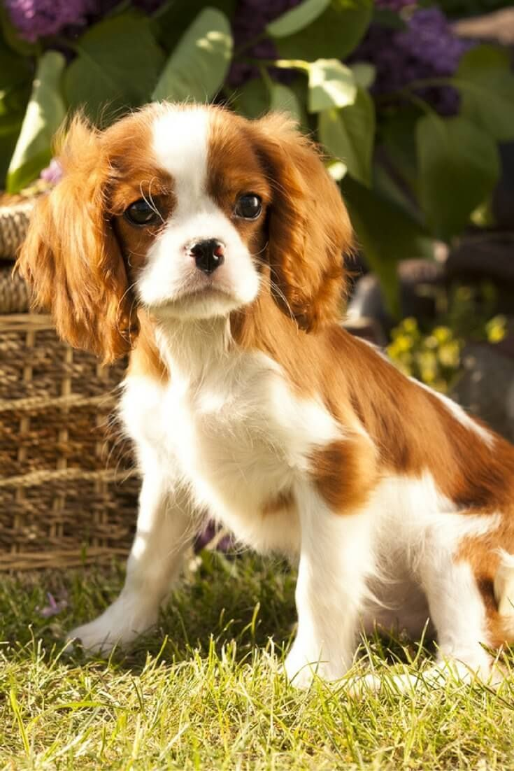 6 Best Dogs For Seniors Cute Small Dogs Cute Dog Pictures Dog Pictures