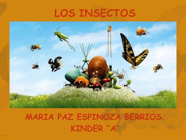 """LOS INSECTOS MARIA PAZ ESPINOZA BERRIOS. KINDER """"A"""""""