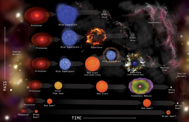 Evolution stellaire Les six types possibles d'évolution stellaire selon la masse initiale de la protoétoile : protoétoile – supergéante bleue – trou noir; protoétoile – supergéante bleue – supernova et trou noir; protoétoile – supergéante bleue – supergéante rouge – supernova et étoile à neutrons; protoétoile – étoile de type solaire – géante rouge – nébuleuse planétaire – naine blanche; protoétoile – naine rouge – naine blanche; protoétoile – naine brune. Crédit : CXC/M. Weiss