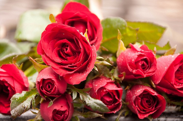 Some of the many red roses at the Trimutri Shrine in Bangkok. This shrine is known as the Lovers Shrine due to the belief that those who pray and leave offerings of roses at the shrine will find true love.