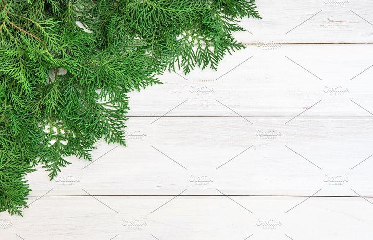 Fresh green pine leaf by Pinkomelet on @creativemarket
