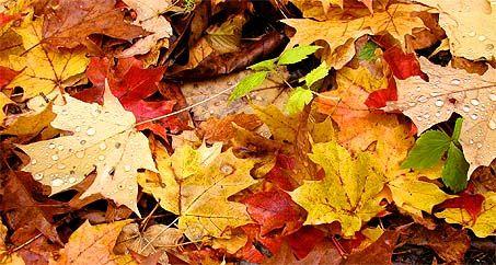 Blog - Beauty-tips voor de herfst!
