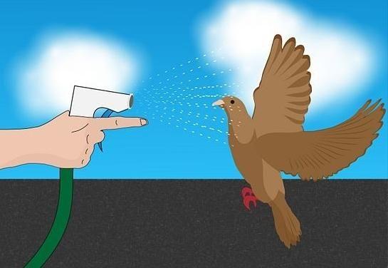 Jak se zbavit holubů na balkoně - Tipy a triky