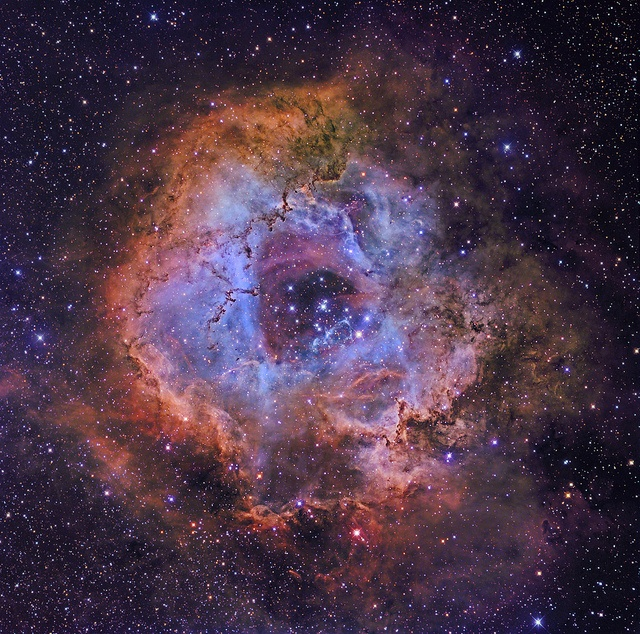 Hubbles Rose