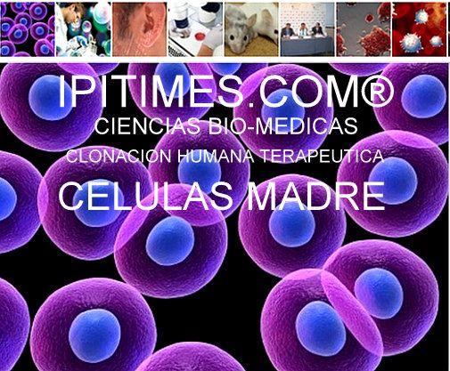 """""""LAS CELULAS MADRE"""" Ciencia Bio-Médicas Clonación. IPITIMES.COM  por Artur Coral."""